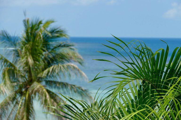 palmen-strand-tom-on-tour